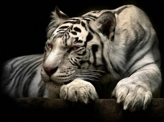 2016-new-year-best-selling-vivid-big-animal-picture-unframed-red-eyes-tiger-oil-painting-on